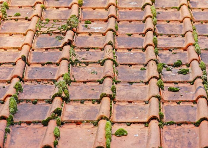 old-roof-2703949_1920